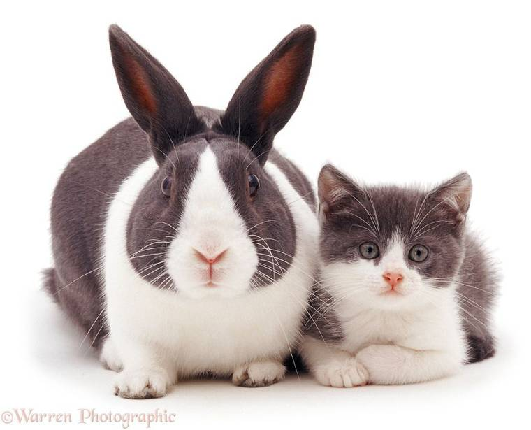 animal-pairing-4.jpg