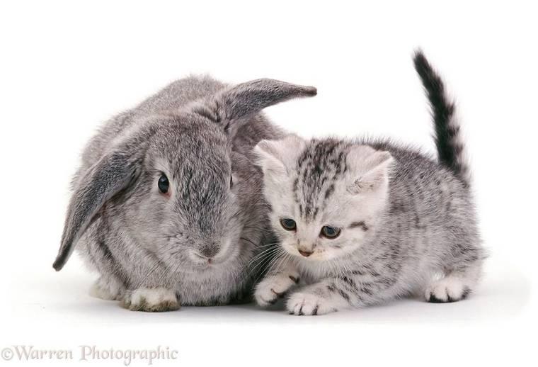 animal-pairing-5.jpg