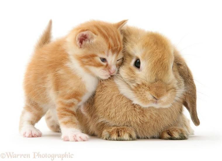 animal-pairing-6.jpg