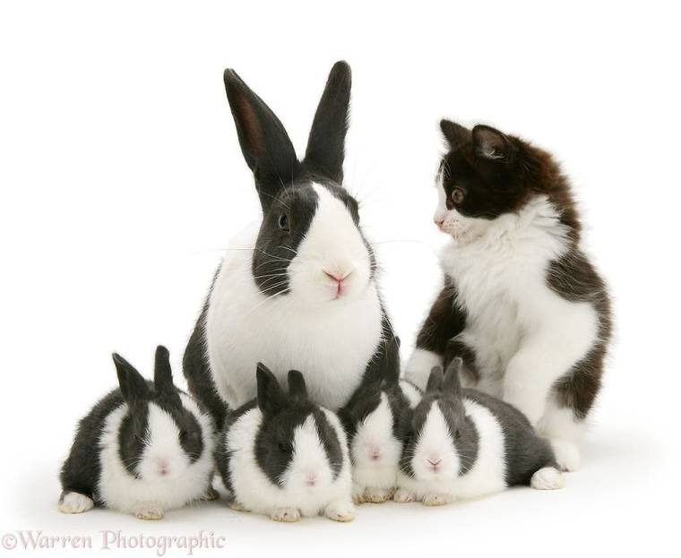 animal-pairing-7.jpg