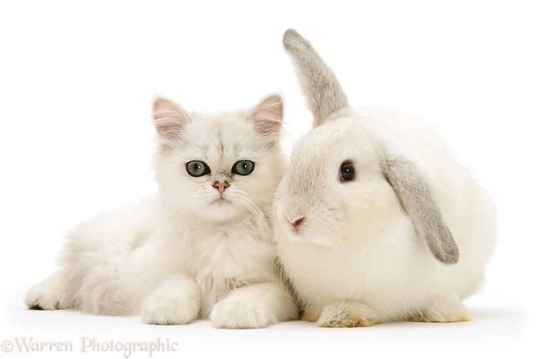 animal-pairing-8.jpg