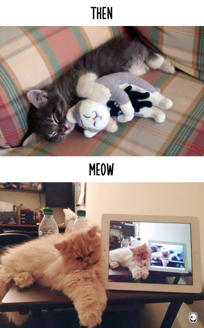 cats-then-now-funny-technology-change-life-10-57162507ede7f_700.jpg