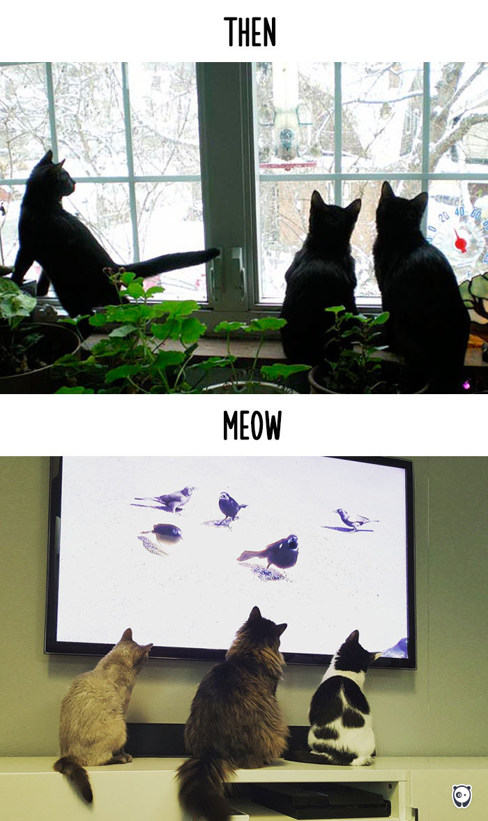 cats-then-now-funny-technology-change-life-11-571618ff6eaf1_700.jpg
