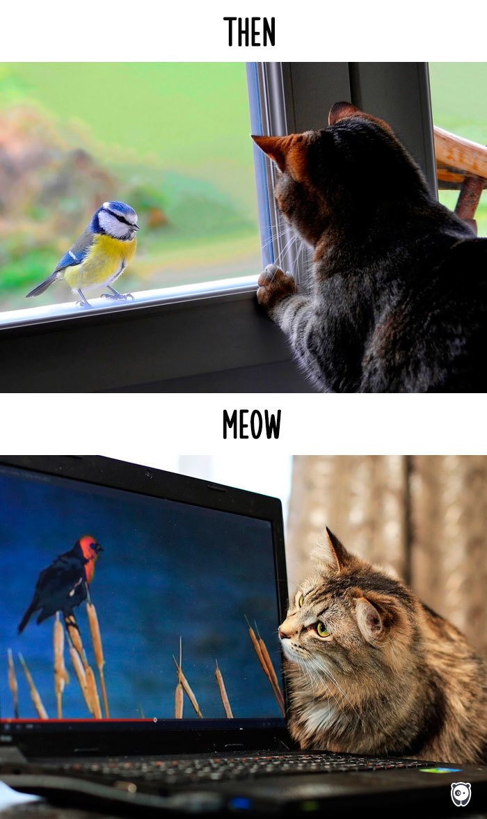 cats-then-now-funny-technology-change-life-13-57162bb03575d_700.jpg
