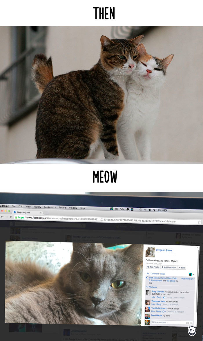 cats-then-now-funny-technology-change-life-15-5716342bb4884_700.jpg