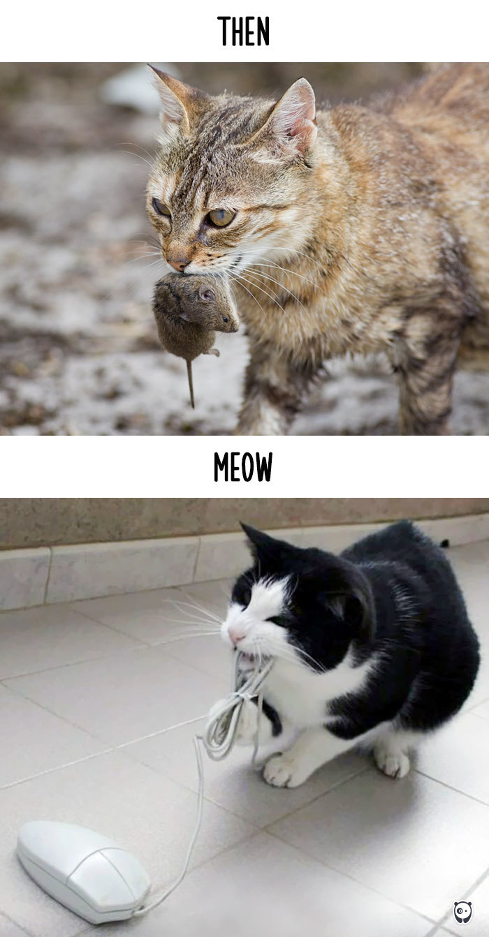 cats-then-now-funny-technology-change-life-19-571621075a8cd_700.jpg