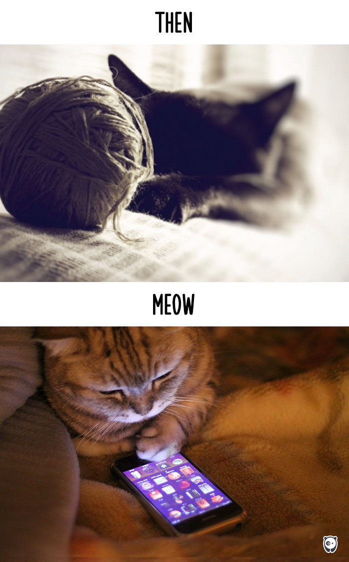 cats-then-now-funny-technology-change-life-2-5715f4cf7fd7f_700.jpg