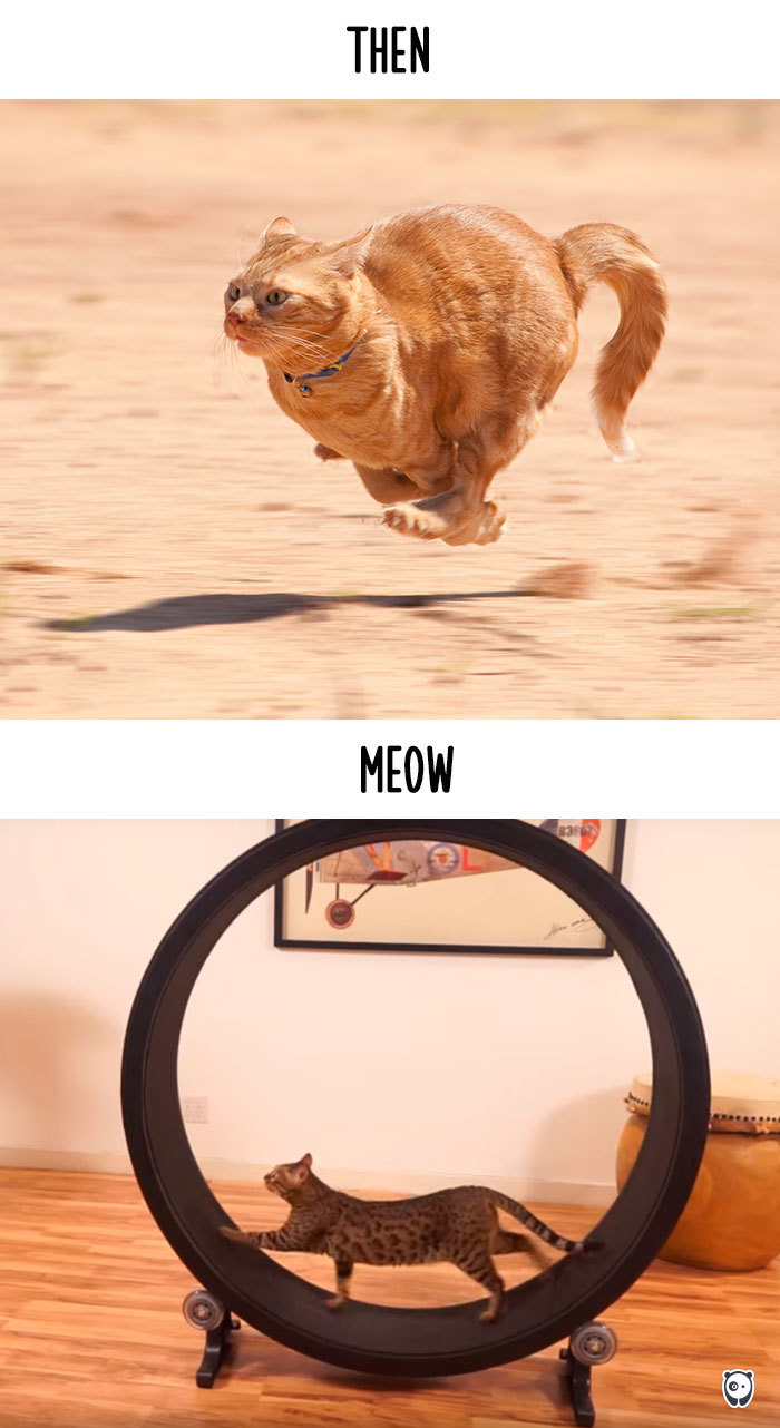cats-then-now-funny-technology-change-life-21-571632966f864_700.jpg