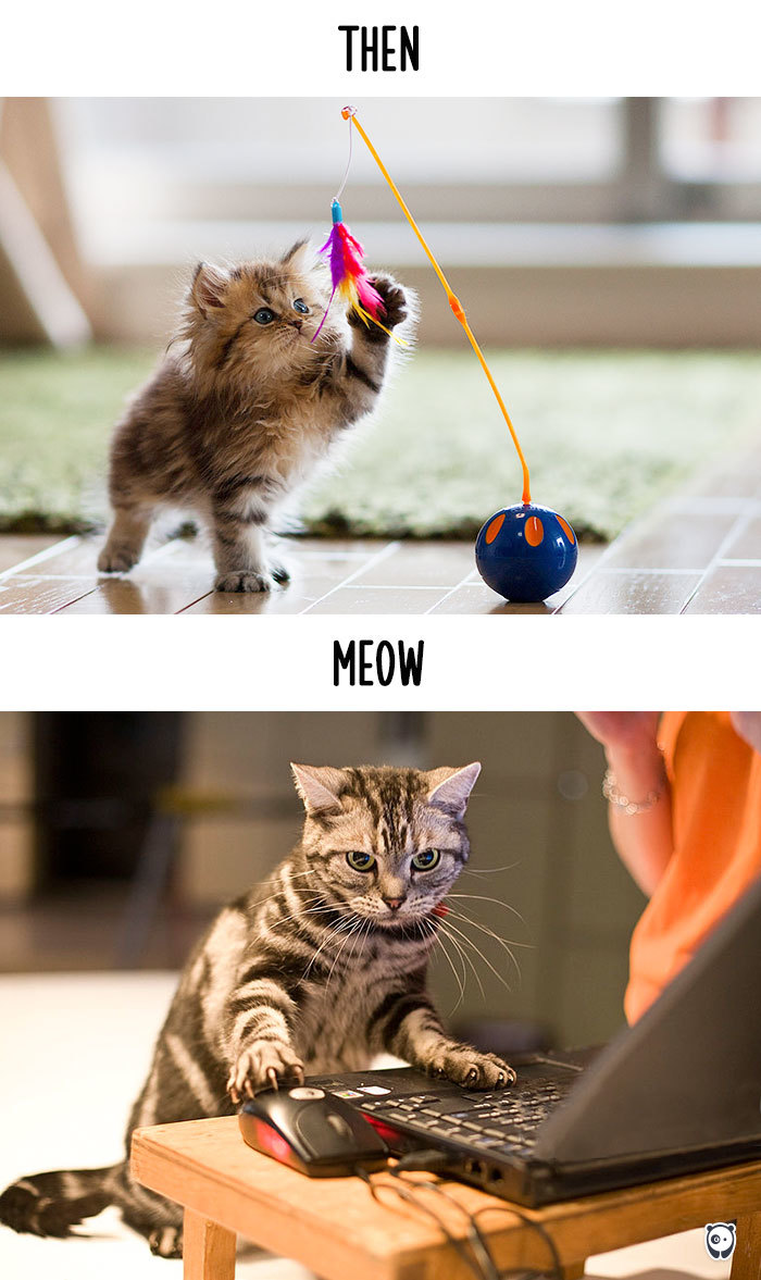 cats-then-now-funny-technology-change-life-3-5715fa427ed08_700.jpg