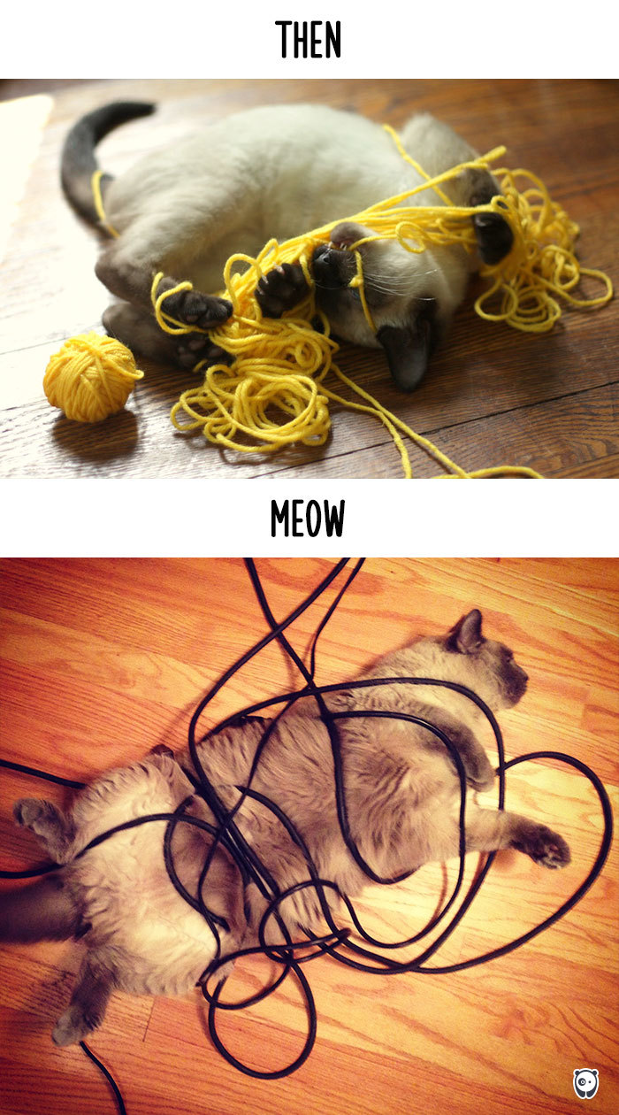 cats-then-now-funny-technology-change-life-7-571600912d6af_700.jpg