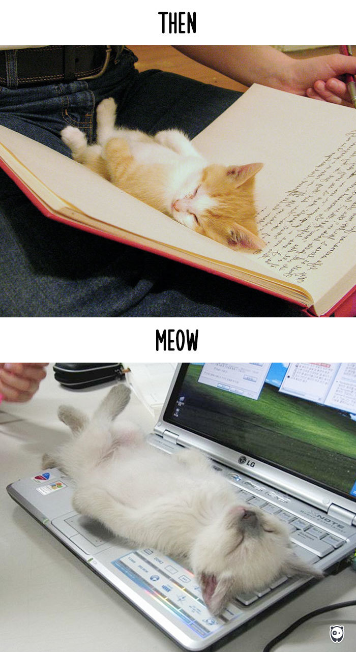 cats-then-now-funny-technology-change-life-8-571614339bfc2_700.jpg