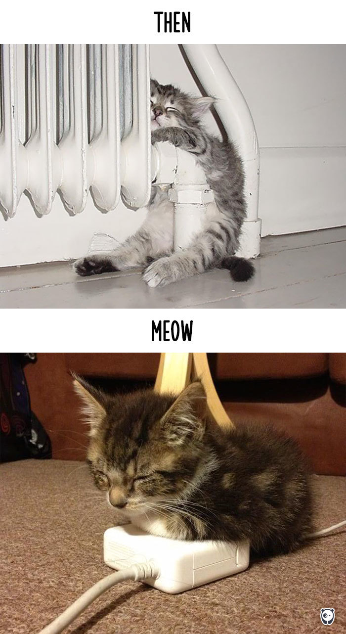 cats-then-now-funny-technology-change-life-9-57161749f2b9d_700.jpg