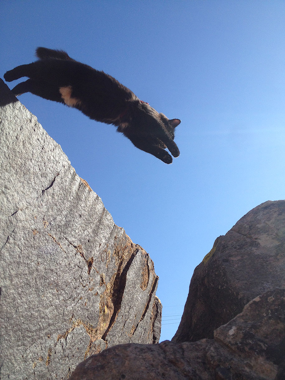 climbing-adopted-cat-craig-armstrong-millie-20.jpg