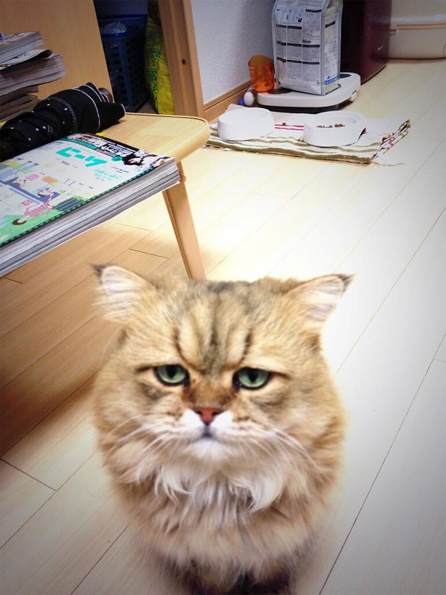 disappointed-cat-18.jpg
