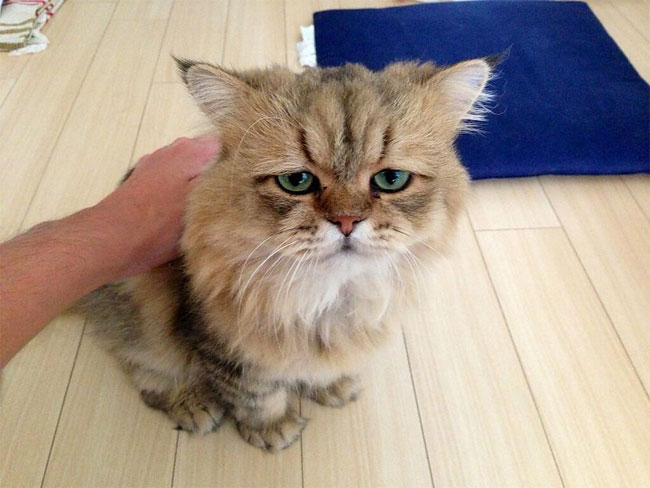 disappointed-cat-26.jpg