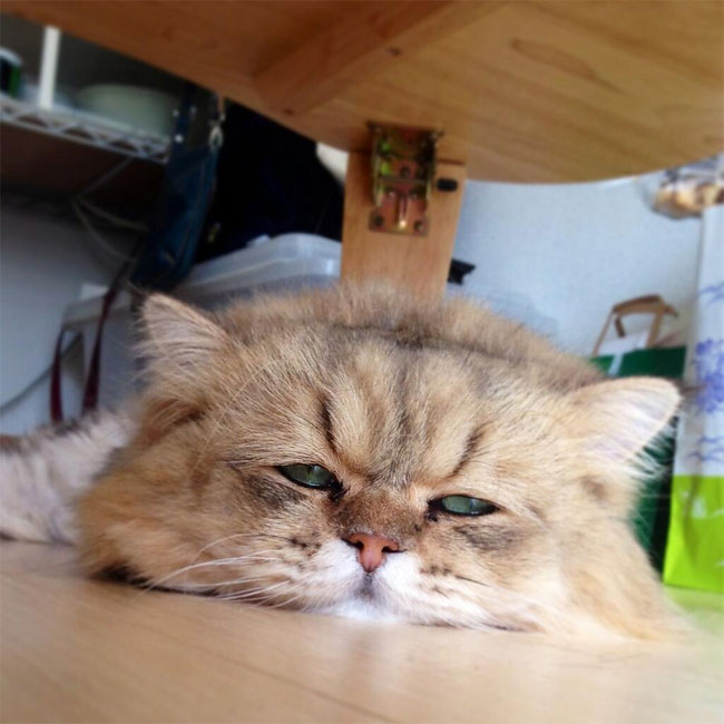 disappointed-cat-34.jpg
