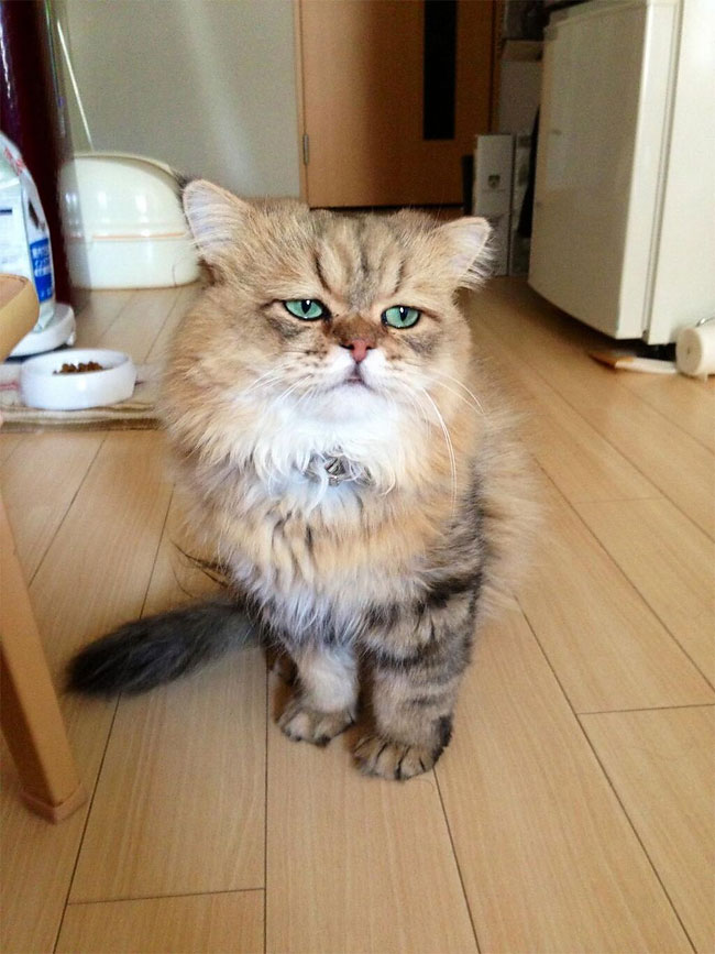 disappointed-cat-75.jpg