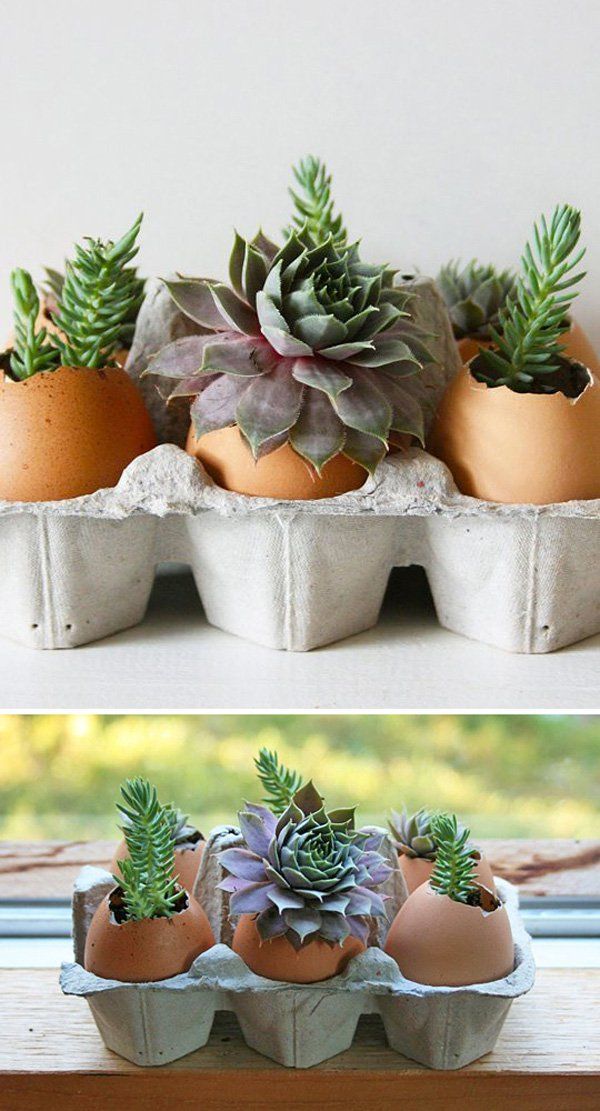 eggshells-are-a-grent-startup-environment-for-tiny-plants-and-seeds.jpg