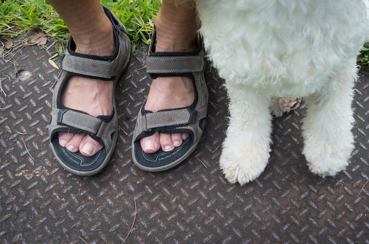 feetsandpaws06.jpg