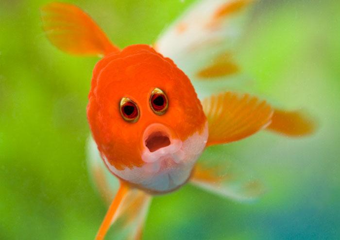 funny-animals-with-front-eyes-100-57da546e5459e_700.jpg
