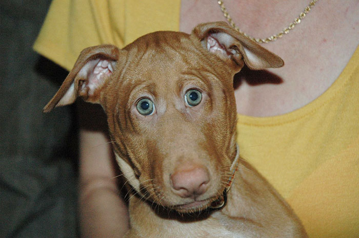 funny-animals-with-front-eyes-14-57da5be31a9d9_700.jpg