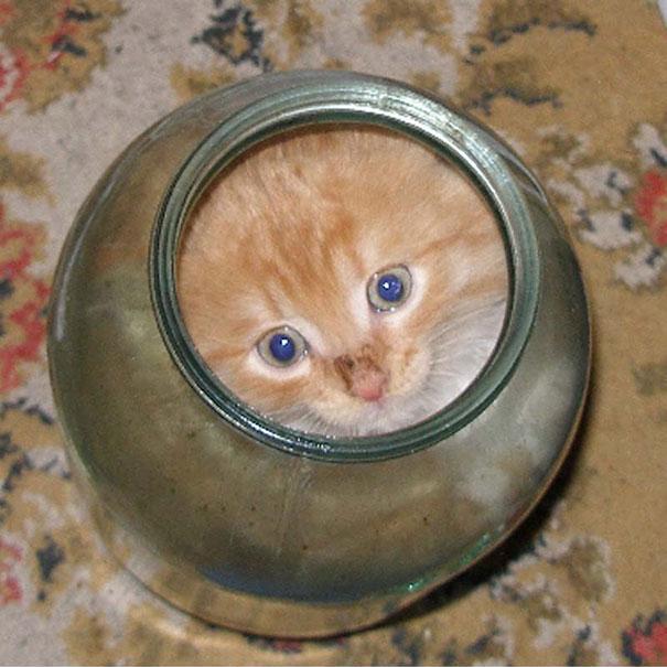 funny-liquid-cats-11.jpg
