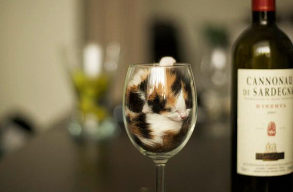 funny-liquid-cats-3.jpg