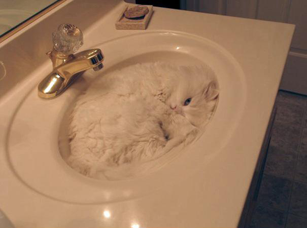 funny-liquid-cats-4_1.jpg