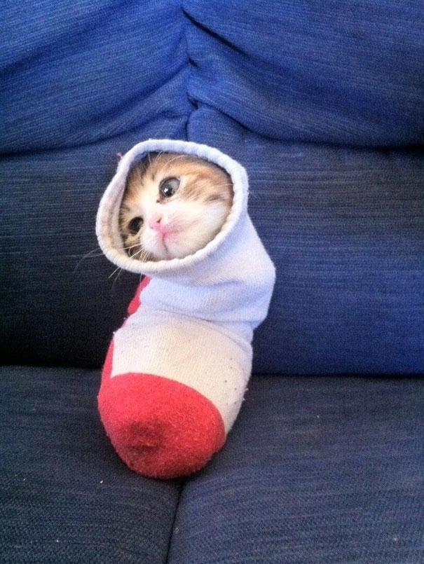 funny-liquid-cats-5.jpg