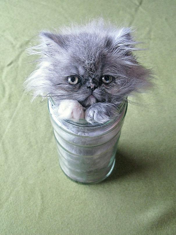 funny-liquid-cats-6.jpg