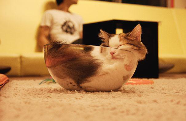 funny-liquid-cats-7.jpg