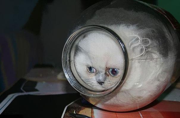 funny-liquid-cats-8.jpg