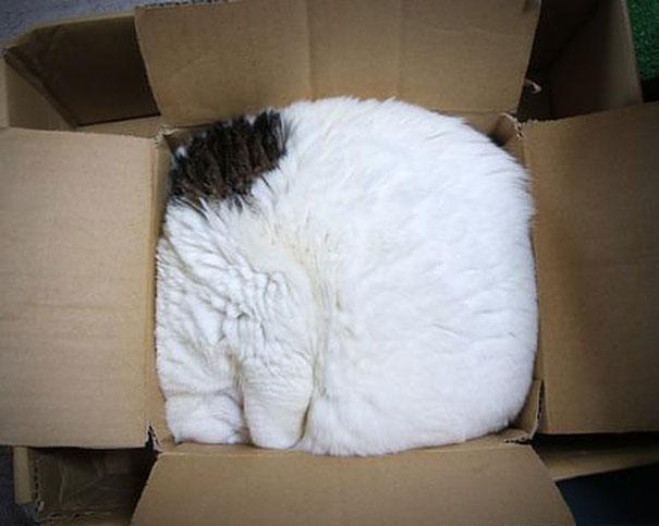 funny-liquid-cats-9.jpg