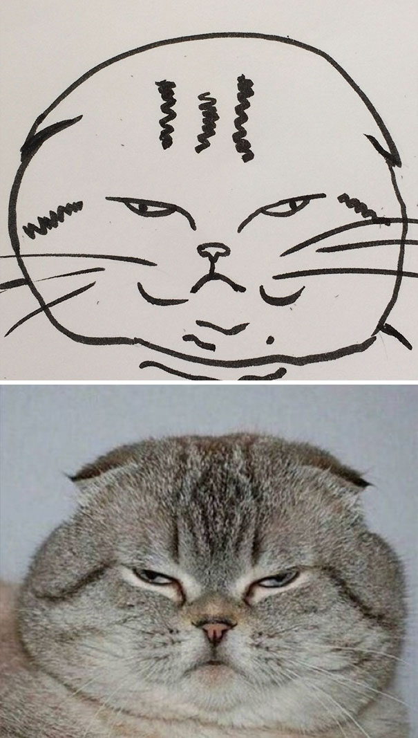 funny-poorly-drawn-cats-10-59705e77bbef5_605.jpg