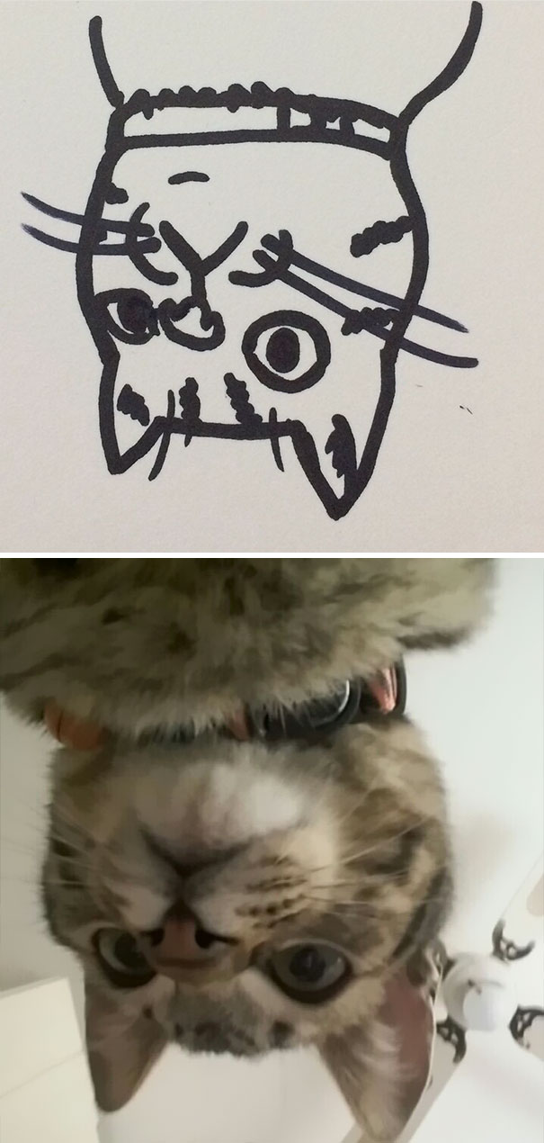 funny-poorly-drawn-cats-7-59705e71ab7e8_605.jpg