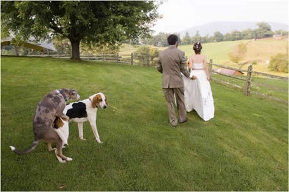 funny-weddings-03.jpg