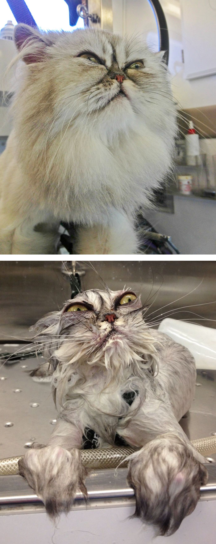 funny-wet-pets-before-after-bath-dogs-cats-49-5728af03c4553_700.jpg