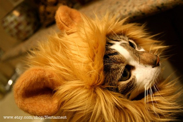 lion-cat-hat-3.jpg