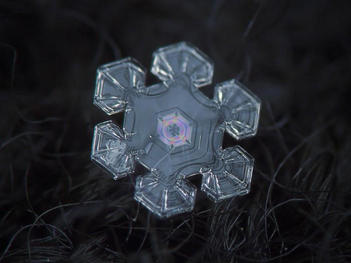 macro-photography-snowflakes-alexey-kljatov-15.jpg