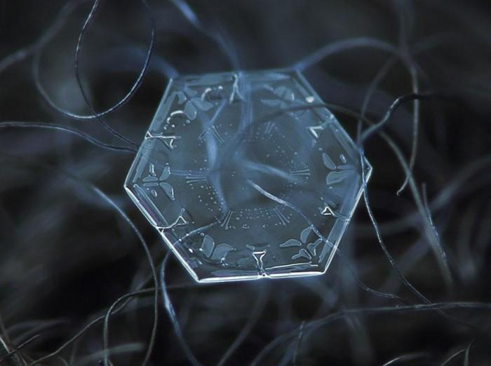 macro-photography-snowflakes-alexey-kljatov-19.jpg
