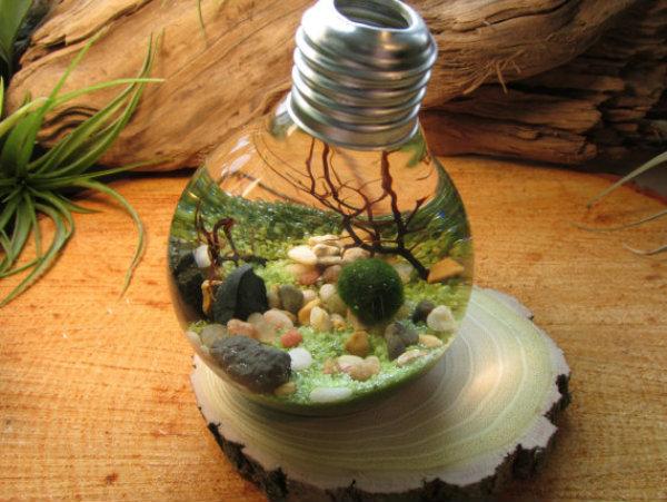 marimo-ball-bulb-aquarium.jpg