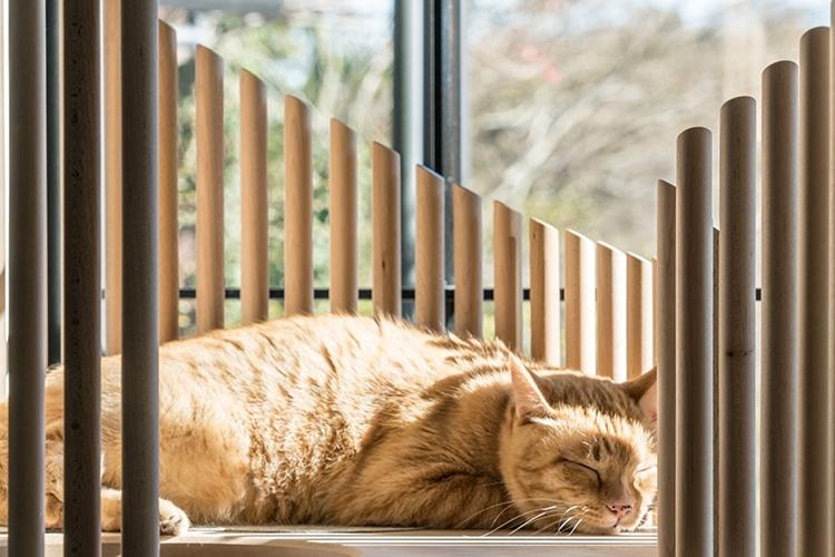 minimalist-cat-furniture-rinn-6.jpg