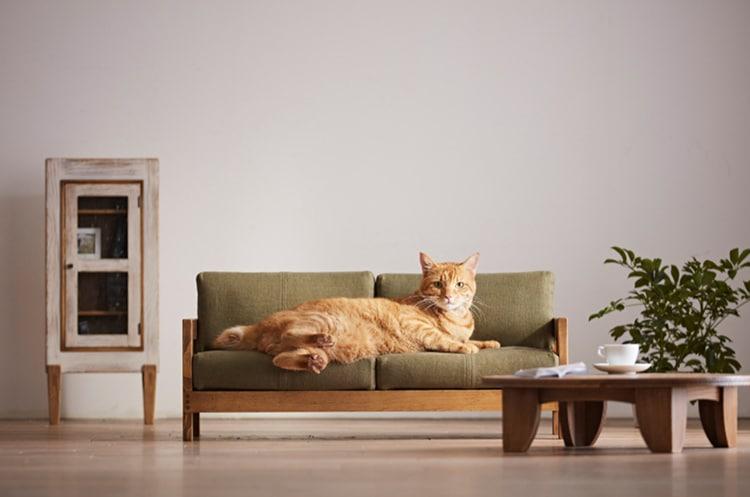 okawa-city-cat-furniture-2.jpg
