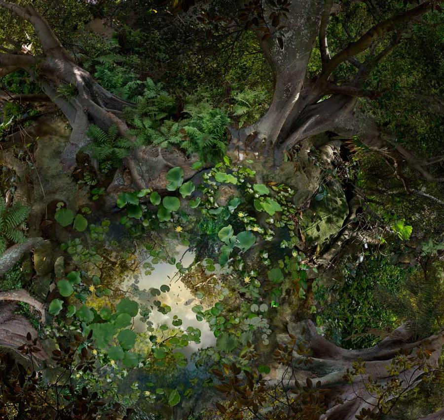 pond-detail.jpg