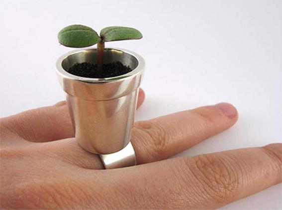 pot-plant-ring.jpg