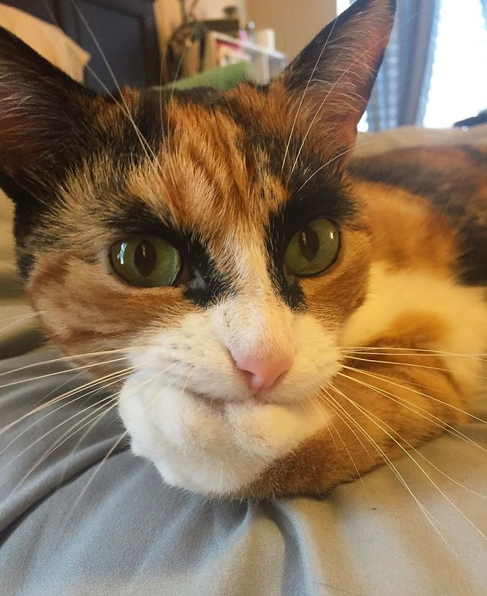 purrfect-eyebrows-2016-trend-is-present-in-the-pet-world-58087270e0b1e_700.jpg