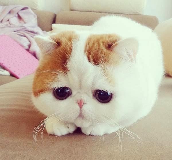 snoopybabe-cute-sad-cat-1.jpg