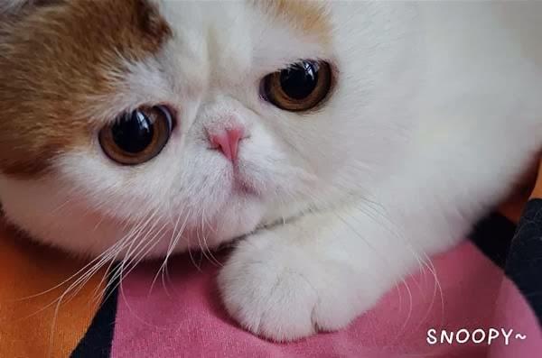 snoopybabe-cute-sad-cat-3.jpg