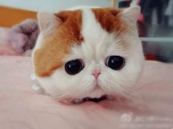 snoopybabe-cute-sad-cat-4.jpg