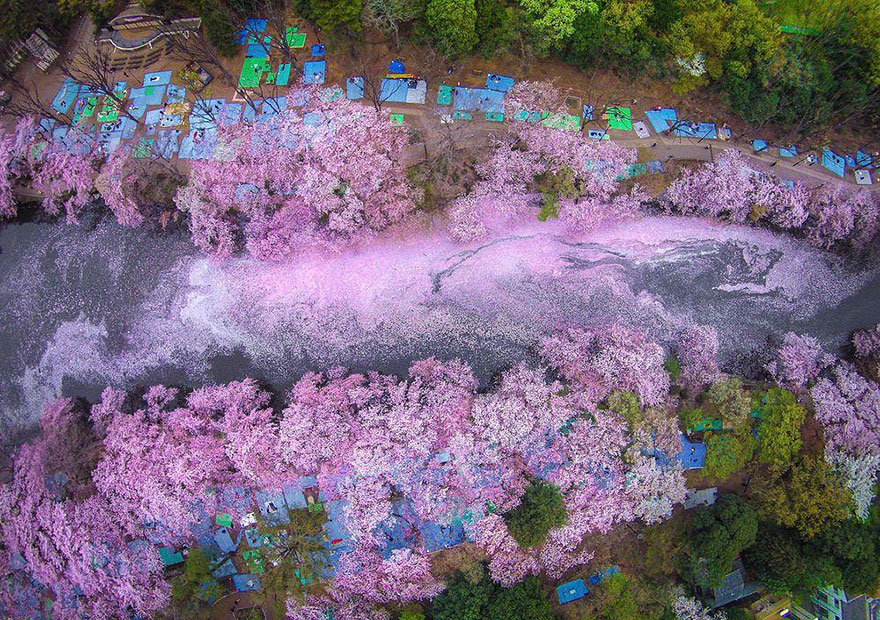spring-japan-cherry-blossoms-national-geographics-110.jpg